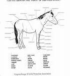 horse parts puzzle