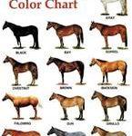horse colors aqha