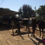 Summer Horse Camp 2016